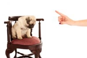 Cómo No se debe castigar a un perro