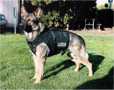 Perro Policia | Planeta Perro