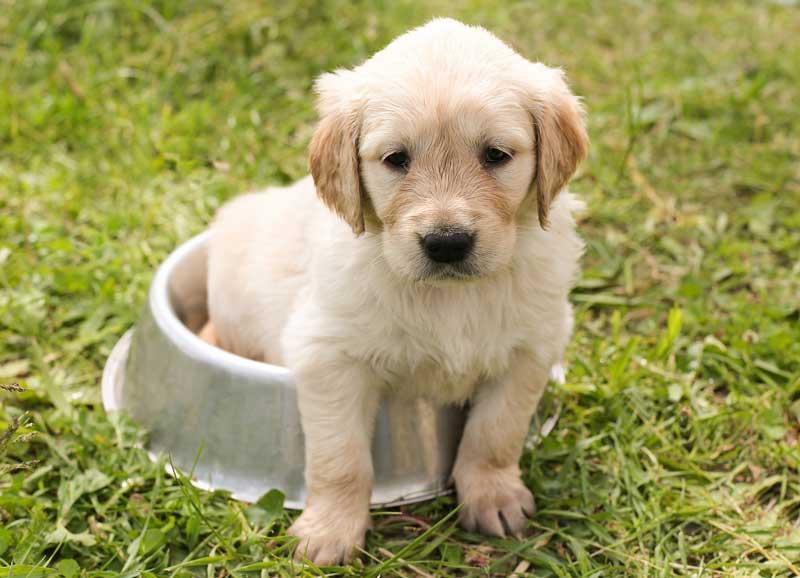 llegada perro