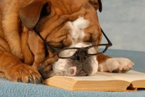 Cuidados de un perro mayor