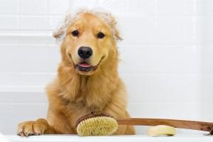 ¿Cómo debo bañar a mi perro?