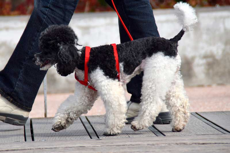 pasear perro
