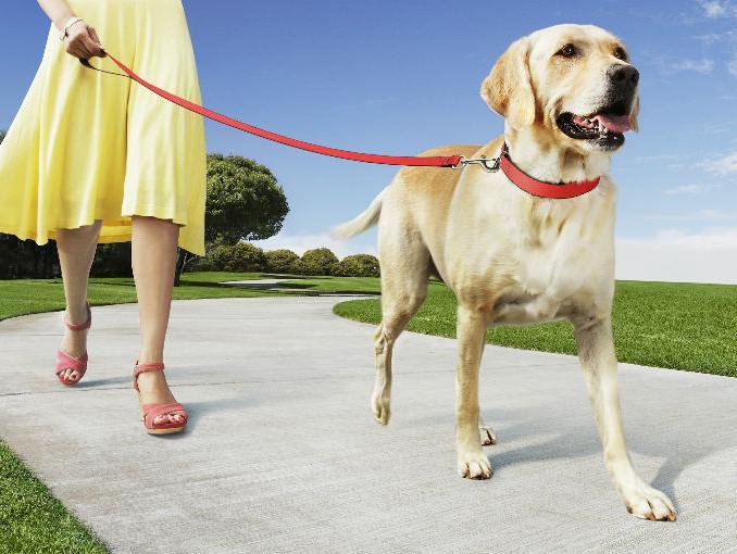 ¿Por qué pasear al perro?