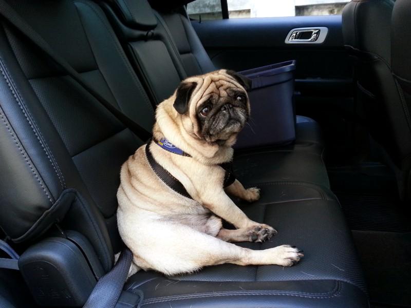 un seguro para perro