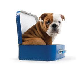 Viajar con tú perro
