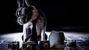 fotografiar a tu perro