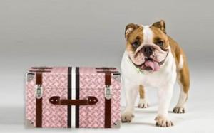 ¿Cómo viajar con un perro?