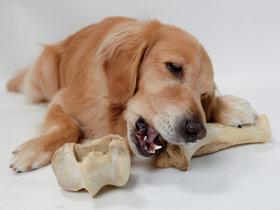 perros huesos