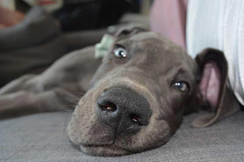 masajes perro