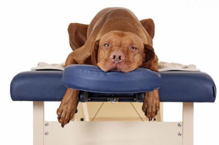 Masajes para tu perro
