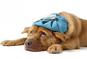Enfermedades comunes en los perros