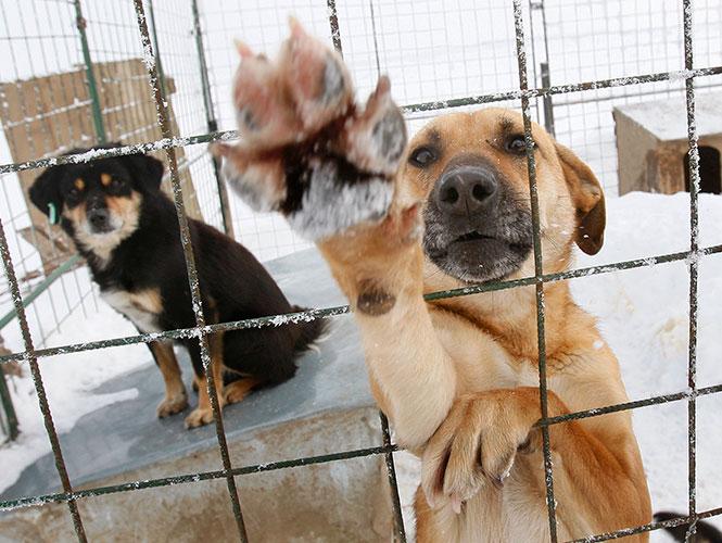 elegir adecuadamente a nuestro perro en una protectora