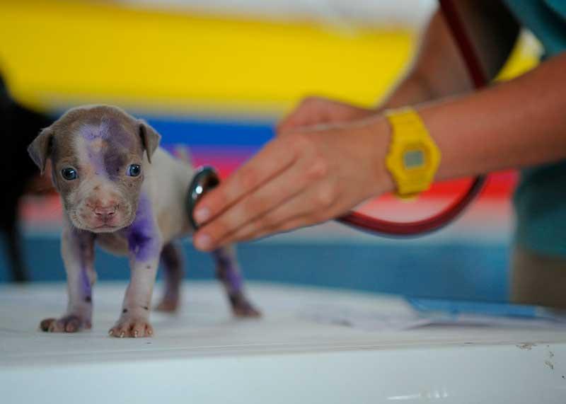 vacunar a su perro