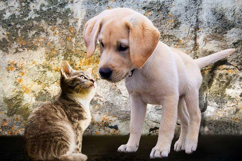 Convivir en casa con otros animales