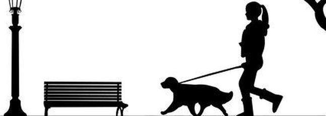 El Paseo Perfecto que necesita tu perro
