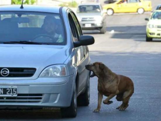 La persecución de coches