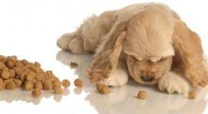Control de peso en los perros