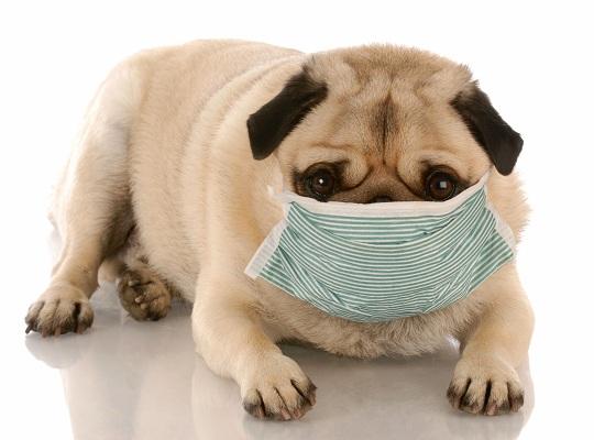 Alergias alimentarias en los perros