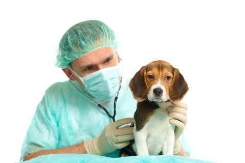 enfermedades  perros