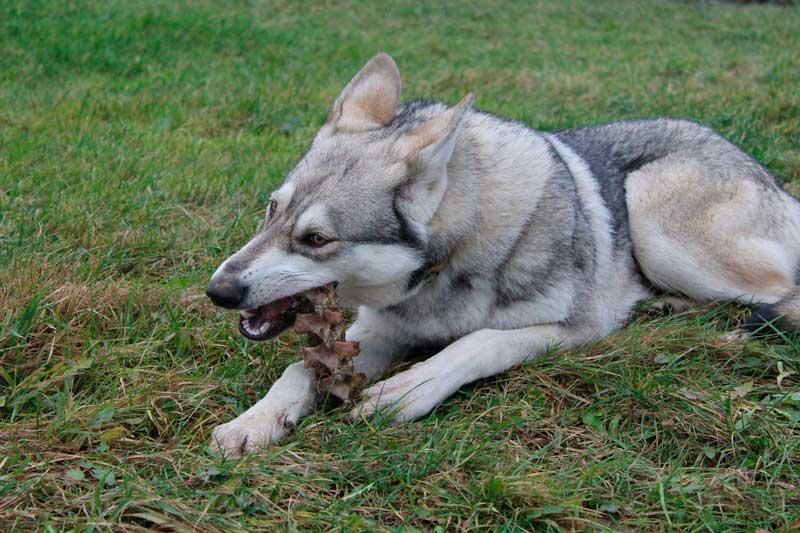 comida mala para perros