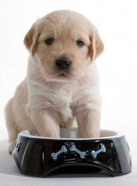 cuidar a tu cachorro