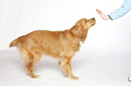 educar a un perro