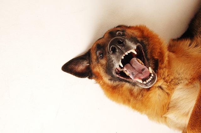 Como tratar a un perro agresivo