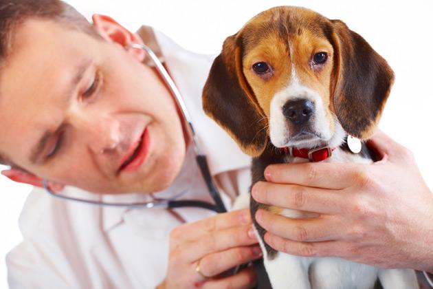 Veterinario Para su Perro