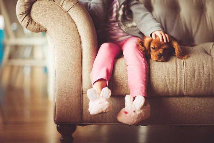 Perros para Familias