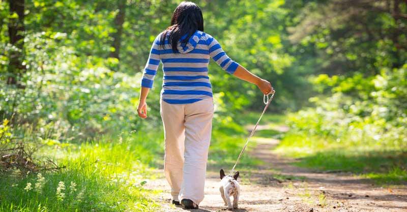 errores al pasear a nuestro perro