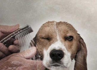 perros lavar