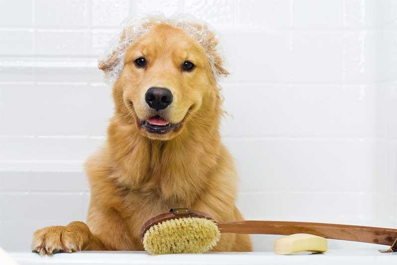mitos sobre bañar a tu perro