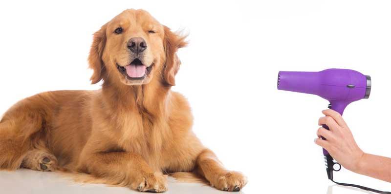 peluqueria perros en casa