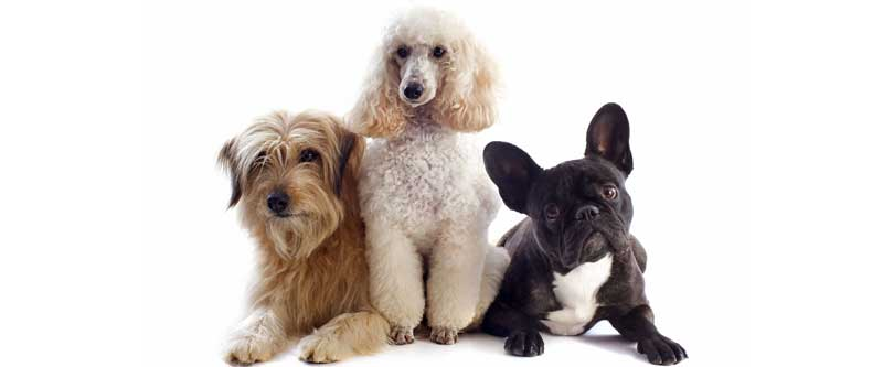 Cómo hacer una sesión de peluquería para perros en casa