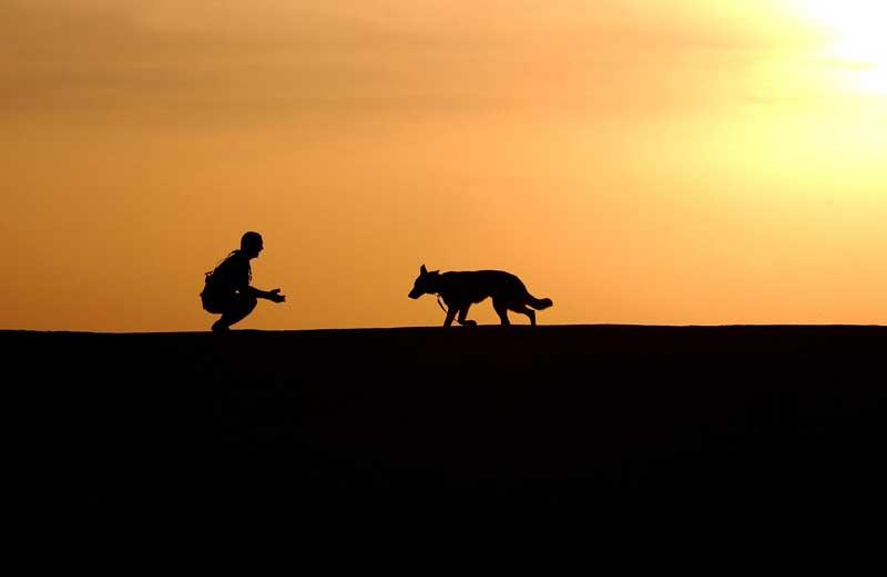 entrenar perro policia
