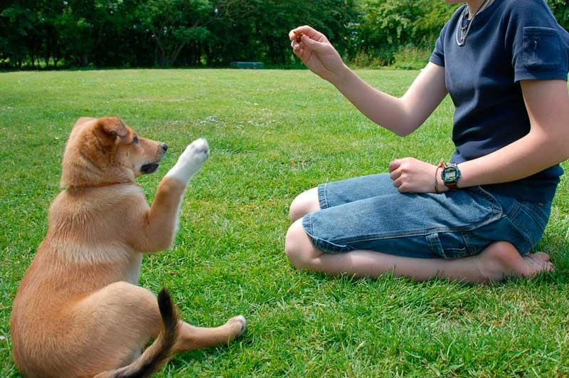 Trucos básicos para tu perro