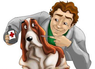 blogs veterinarios mascotas
