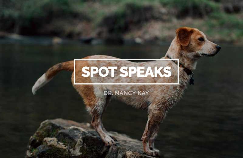 blog de veterinarios