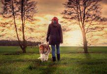 pasear a tu perro