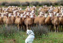 profesiones perros
