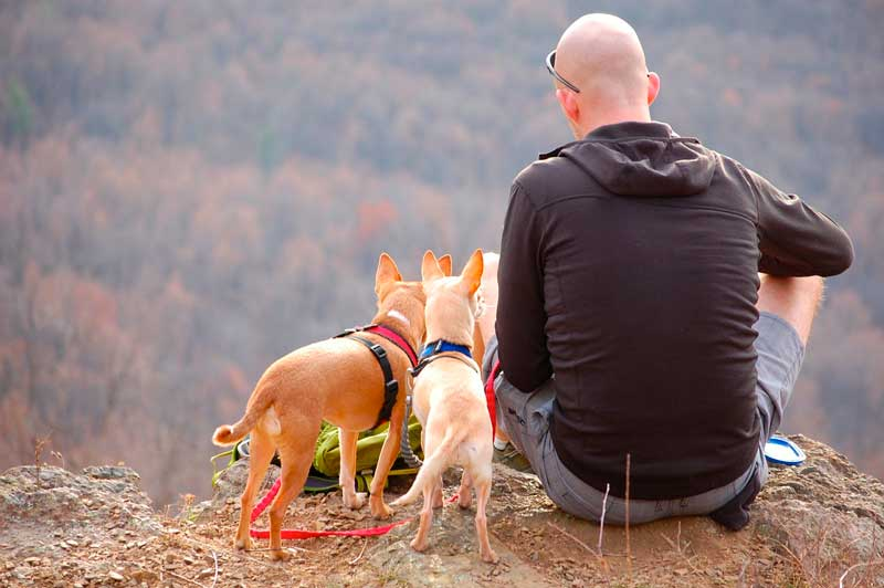 sociabilizar a tu perro