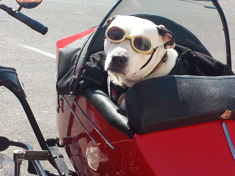 viajar con tu perro
