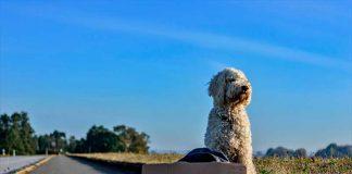 Como viajar con tu perro