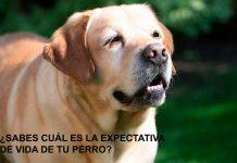 ¿Sabes cuál es la expectativa de vida de tu perro?