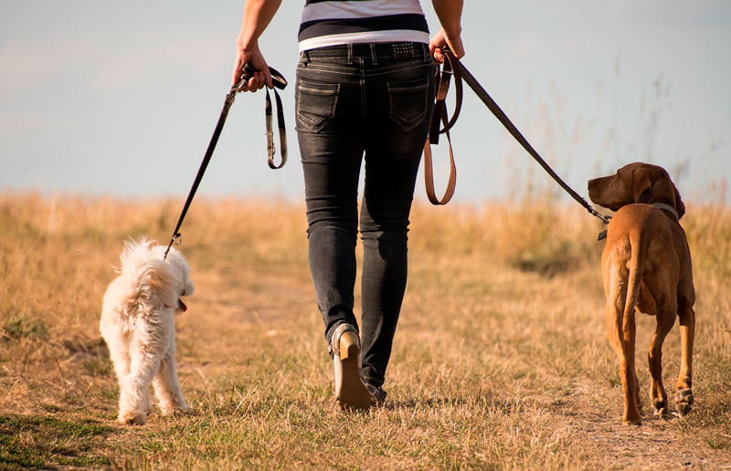 paseo pipi perros