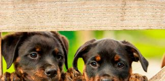 perros macho o hembra