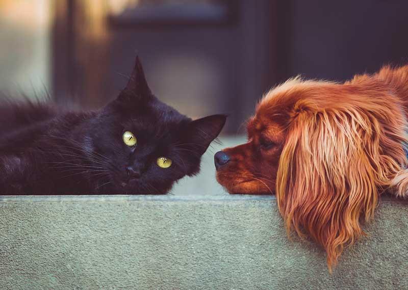 Tips para tu perro y tu gato no peleen