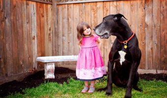 perros ideales para niños