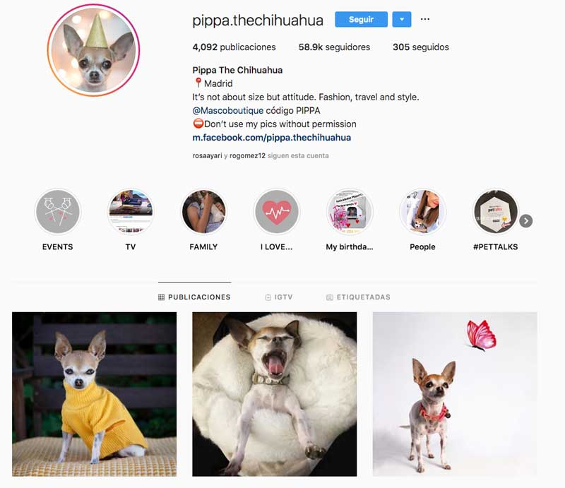 Pippa influencer canina