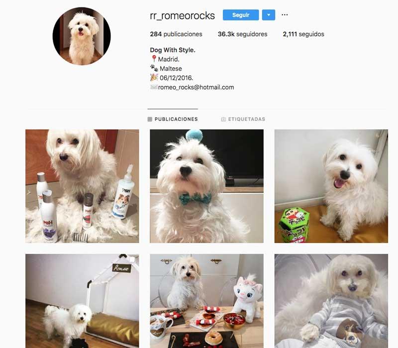 perro influencer romeo